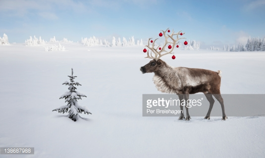 138687988-a-reindeer-with-ornaments-in-his-antlers-by-gettyimages