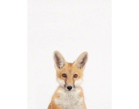 Baby-Fox-art-for-nursery